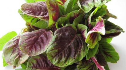 Những loại rau quen thuộc giúp giảm lão hóa tăng tuổi thọ mỗi ngày